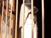 vringa-szerzetes-web